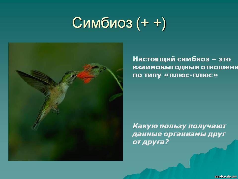 Отношение каких организмов служат примером симбиоза